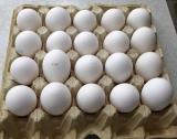 Яйцо высшей категории